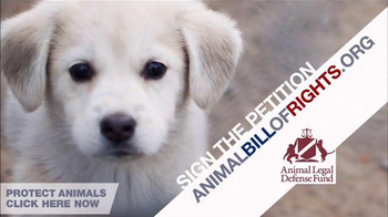 Animal Legal Defense Fund TV Spot, 'Sign the Animal Bill of Rights' - Thumbnail 8
