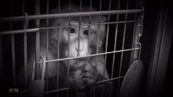 Animal Legal Defense Fund TV Spot, 'Sign the Animal Bill of Rights' - Thumbnail 5