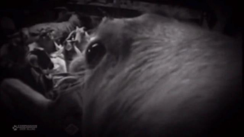 Animal Legal Defense Fund TV Spot, 'Sign the Animal Bill of Rights' - Thumbnail 6