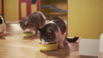 Friskies 7 TV Spot, 'Taste Kitchen' - Thumbnail 8