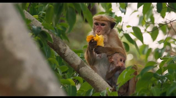 Monkey Kingdom - 1721 commercial airings