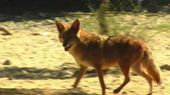 Popeyes Cajun Surf & Turf TV Spot, 'Fox' - Thumbnail 1