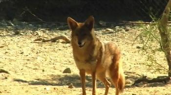 Popeyes Cajun Surf & Turf TV Spot, 'Fox' - Thumbnail 2