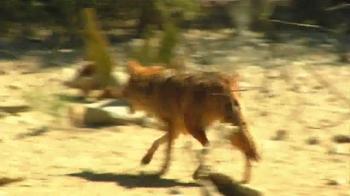 Popeyes Cajun Surf & Turf TV Spot, 'Fox' - Thumbnail 4