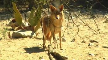Popeyes Cajun Surf & Turf TV Spot, 'Fox' - Thumbnail 6