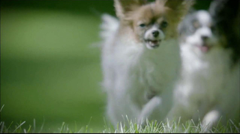 Purina Pro Plan P5 Dog Training App, 'Animal Planet: Energetic Sundance' - Thumbnail 1