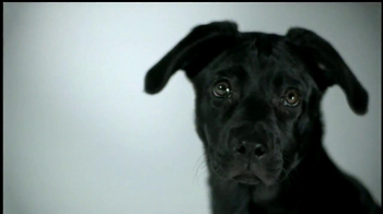 Mutt-i-grees TV Spot Featuring Renee Felice Smith - Thumbnail 4