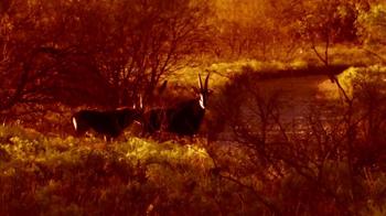 Montgomery Properties Ranch TV Spot, 'MPR Hunts' - Thumbnail 5