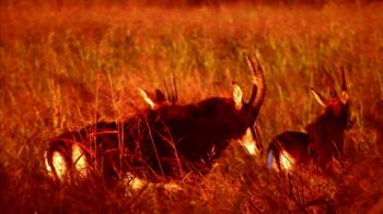 Montgomery Properties Ranch TV Spot, 'MPR Hunts' - Thumbnail 9