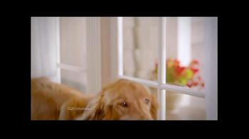 PetSmart Labor Day Sale TV Spot, 'Hills Science Diet' - Thumbnail 3