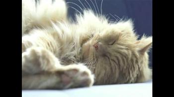 Kitty Cushion TV Spot - Thumbnail 1