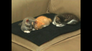 Kitty Cushion TV Spot - Thumbnail 2