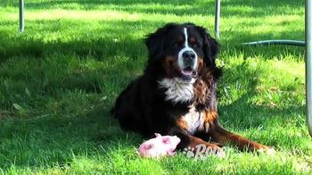 Rover.com TV Spot, 'Need a Dog Sitter?' - Thumbnail 4
