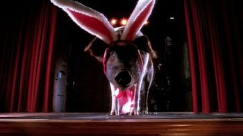 Cadbury TV Spot, 'Bunny Auditions' - Thumbnail 2