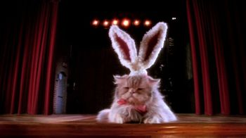 Cadbury TV Spot, 'Bunny Auditions' - Thumbnail 4