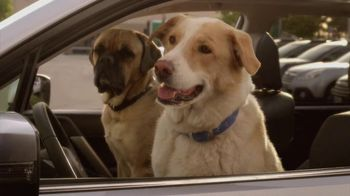 Subaru TV Spot 'Dog Tested, Dog Approved' - 113 commercial airings