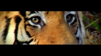 International Fund for Animal Welfare TV Spot - Thumbnail 1