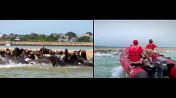 International Fund for Animal Welfare TV Spot - Thumbnail 7