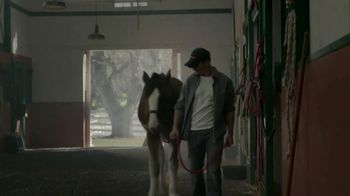Budweiser 2013 Super Bowl TV Spot, 'Brotherhood' Song by Fleetwood Mac - 300 commercial airings