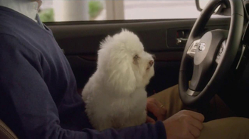 Subaru TV Spot, 'Dog Approved' - Thumbnail 6