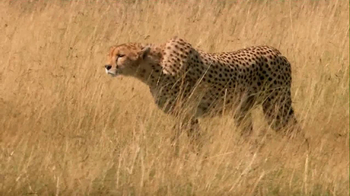 Skechers 2013 Super Bowl GOrun2 TV Spot, 'Man vs. Cheetah'  - Thumbnail 3
