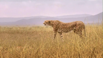 Skechers 2013 Super Bowl GOrun2 TV Spot, 'Man vs. Cheetah'  - Thumbnail 4