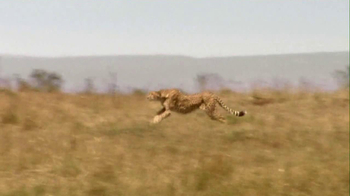 Skechers 2013 Super Bowl GOrun2 TV Spot, 'Man vs. Cheetah'  - Thumbnail 5
