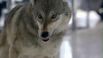 Cars.com 2013 Super Bowl TV Spot, 'Wolf Drama' - Thumbnail 8