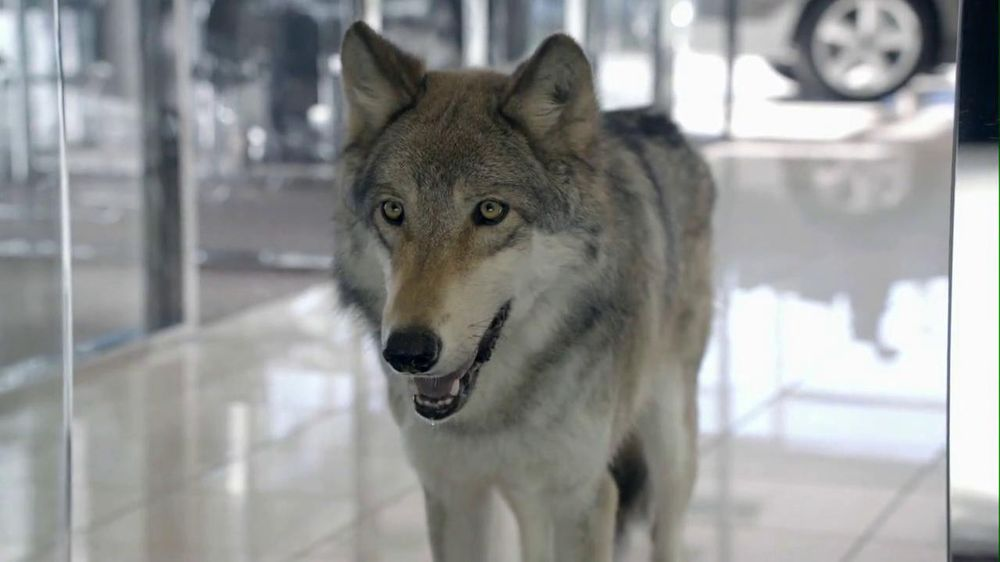 Cars.com: Wolf Drama