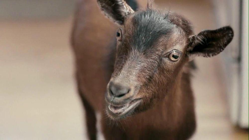 Doritos: Screaming Goat