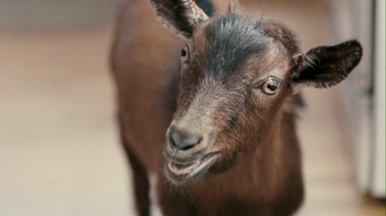 Doritos 2013 Super Bowl TV Spot, 'Screaming Goat' - 285 commercial airings