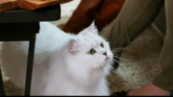 Fancy Feast Delights with Cheddar TV Spot, 'Cheese Tray'  - Thumbnail 7