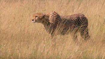 Skechers Super Bowl 2013 Teaser, 'Man vs. Cheetah'