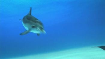 Birds Eye TV Spot, 'Dolphins' - Thumbnail 1