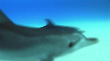 Birds Eye TV Spot, 'Dolphins' - Thumbnail 2