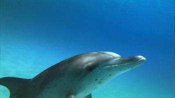 Birds Eye TV Spot, 'Dolphins' - Thumbnail 5