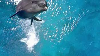 Birds Eye TV Spot, 'Dolphins' - 1357 commercial airings