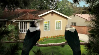 Windex Touch-Up Cleaner TV Spot, 'Crows' - Thumbnail 1