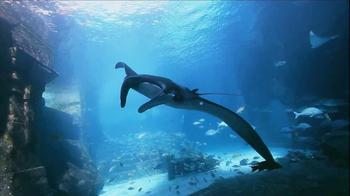 Atlantis TV Spot, 'Imagine: Offer Ends Soon' - Thumbnail 3