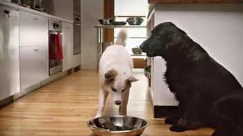 Rachael Ray Nutrish TV Spot, 'If Pets Could Make Their Food' Ft Rachael Ray - Thumbnail 5