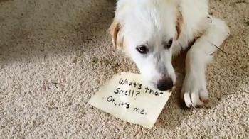 STAINMASTER TV Spot, 'Unshame Your Pet' - Thumbnail 4