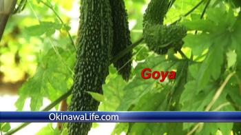 Okinawa Life TV Spot, 'Life is Beautiful' - Thumbnail 8