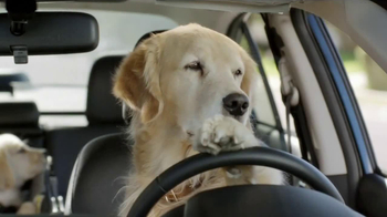 Subaru TV Spot, 'Dog Tested: In the Dog House' - Thumbnail 5