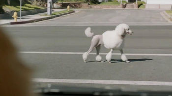 Subaru TV Spot, 'Dog Tested: In the Dog House' - Thumbnail 6