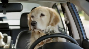 Subaru TV Spot, 'Dog Tested: In the Dog House' - Thumbnail 7