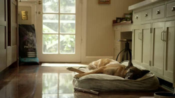 Purina Pro Plan TV Spot, 'If Your Dog Can Dream It: Fetch' - Thumbnail 1