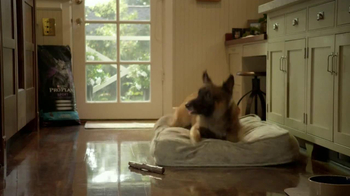Purina Pro Plan TV Spot, 'If Your Dog Can Dream It: Fetch' - Thumbnail 10