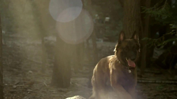 Purina Pro Plan TV Spot, 'If Your Dog Can Dream It: Fetch'