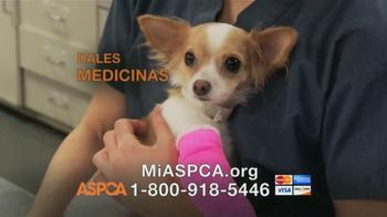 ASPCA TV Spot, Letra por Sinead O'Connor [Spanish]