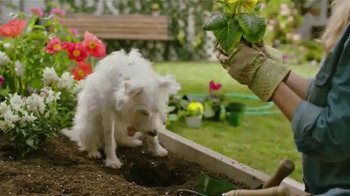 PetSmart Spring Savings Sale TV Spot, 'Dig the Savings' - Thumbnail 2